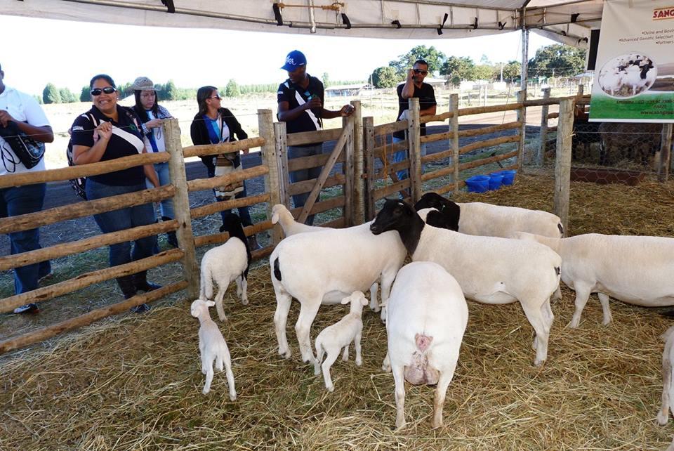 Agrobrasília 2013 De olho na tecnologia