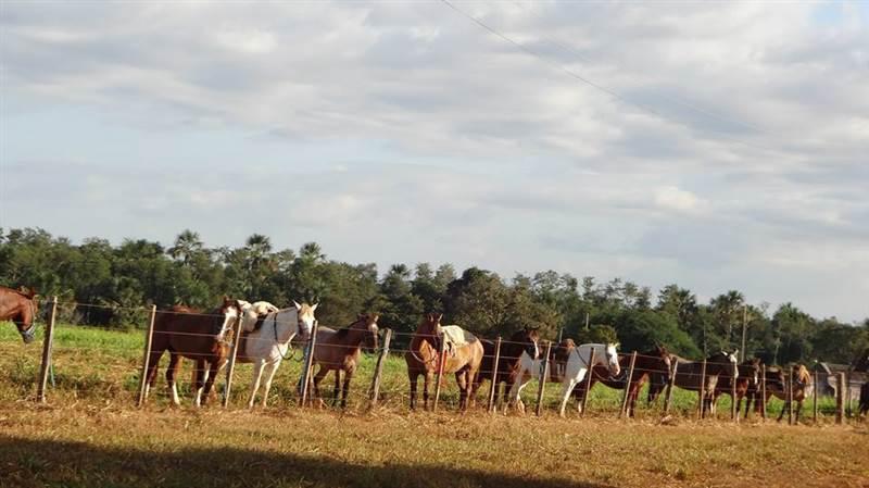 Visita Técnica no Entre Ribeiros- Fazenda Agropel